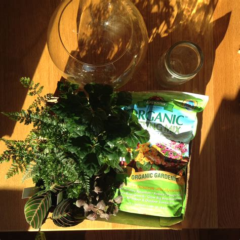 Do You Winter Gardening Blues by Winter Gardening Projects To Keep You Sane