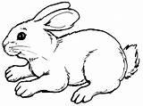 Rabbit Coloring Pages Bunny Clipart Cartoon Clipartpanda Colouring Rabbits Sheet Drawings Sheets Bunnies Terms Printable sketch template