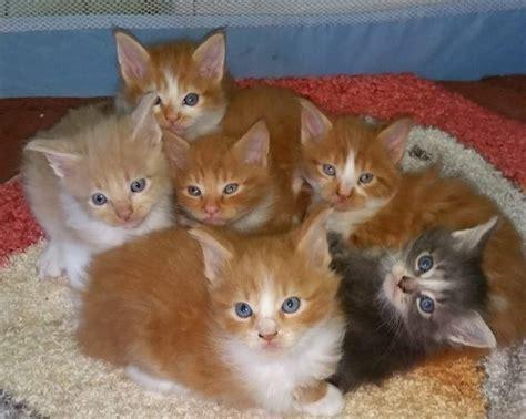 Cerco In Regalo - cerco gattini