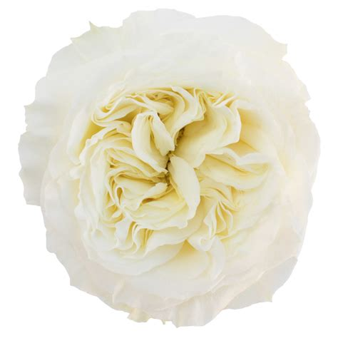 preserved flowers mayra white garden magnaflor