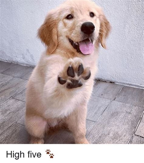 Meme High Five - meme high five 28 images meme high five funny pictures