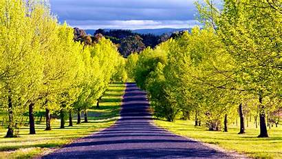 Road Lined Trees Mountain Tree Spring Background