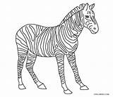 Zebra Coloring Pages Stripes Printable Without Template sketch template