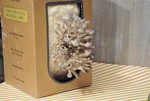 Comment Cultiver Des Champignons : un kit pour faire pousser des pleurotes la maison ~ Melissatoandfro.com Idées de Décoration