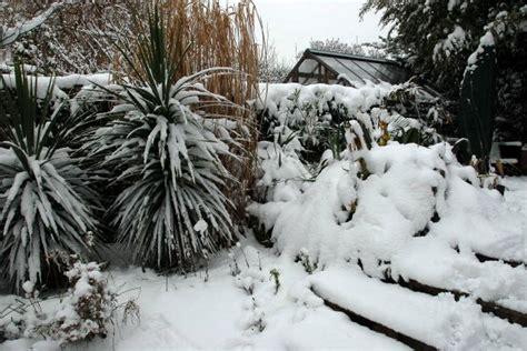 winter interest   cool tropical garden