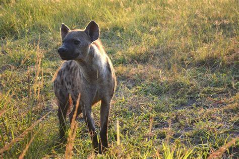 unusual animals  kenya  gamewatchers safaris