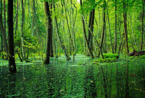 deforestation  present  future amazon