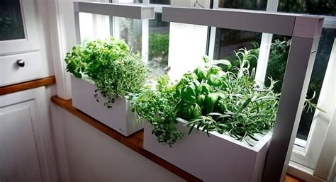 Herb Garden Indoor : Fun & Creative Tips For Growing An Indoor Herb Garden