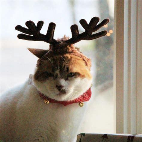 Dzīvnieki, kuriem patīk Ziemassvētki! - Spoki