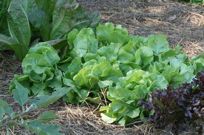 images  edible gardening  pinterest
