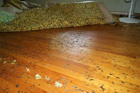 Cleaning Carpet Glue From Hardwood Floors by Cleaning How Do I Remove Stuck Melted Foam From