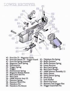 Wiring Diagram  11 Ar 15 Parts Diagram Lower Receiver