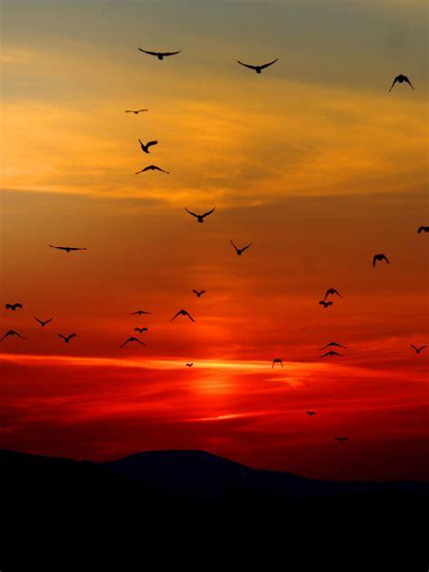 Wallpaper Photos Of by Birds In Sunset Wallpaper Mobile Desktop Background