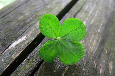 four leaf clover 4 leaf clover fuel lines