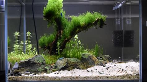 how to make an aquascape that tree by the nano aquascape week 6