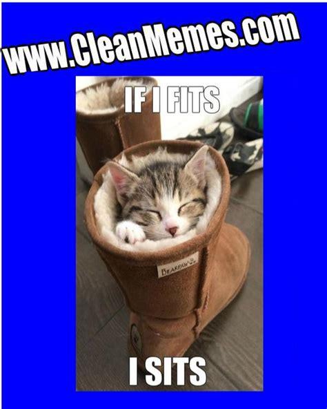Cat Memes Clean - clean warrior cat memes cute cats
