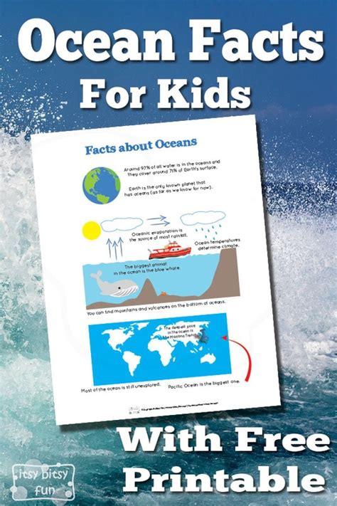 ocean facts  kids itsy bitsy fun