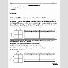 Genetics & Punnett Squares Worksheet By Age Of Innovation Education Products
