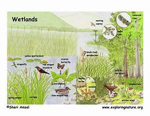 Marshes  Swamps And Bogs