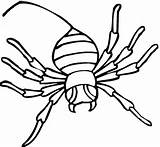 Spinne Ausmalbilder Aranhas Spinnen Ausmalbild sketch template