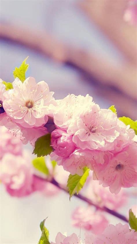 flower wallpaper phone gallery