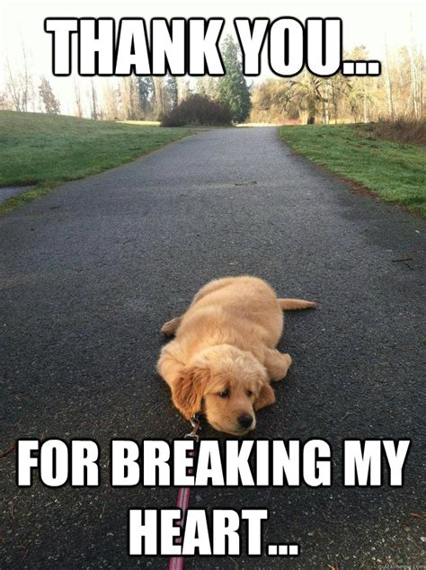 Heart Broken Memes - thank you for breaking my heart sad dog quickmeme