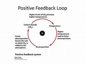 Positive Feedback Loop Examples - Bing images
