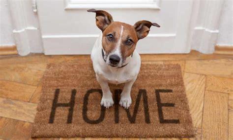 Apartment Dogs Best Dog Breeds For Apartments K9 Math Wallpaper Golden Find Free HD for Desktop [pastnedes.tk]