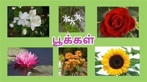 learn flower   tamil  kids