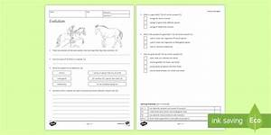 Evolution Homework Worksheet    Activity Sheet