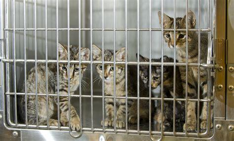 national adopt  shelter pet day american humane