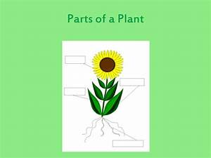 Parts Of A Plant And Their Function By Luciesmith1984