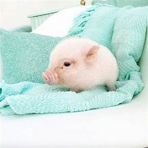 24 Cute and Fluffy Animals | Animals, Piglets and Fluffy ...