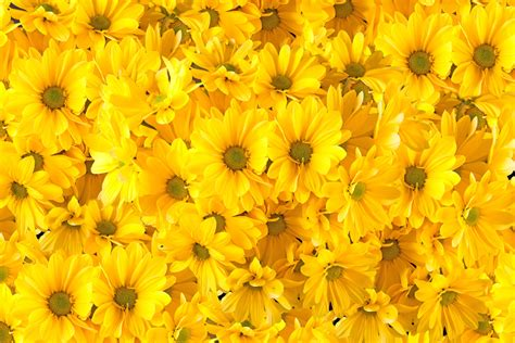 regalare fiori significato qual 232 il significato dei fiori gialli