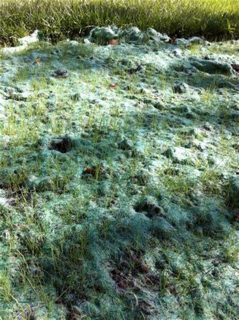 grass seed mat pennington 601907 netless seed starter mat