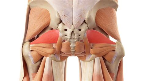 2 Piriformis Exercises To Alleviate Glute And Leg Pain