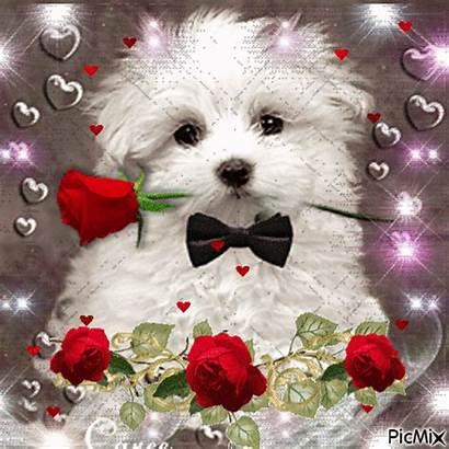 Valentines Puppy Valentine Happy Animated Puppies Google
