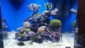 Aquarium Einrichten 60l : mein erstes mw dennerle 60l cube seite 2 dennerle ~ Michelbontemps.com Haus und Dekorationen