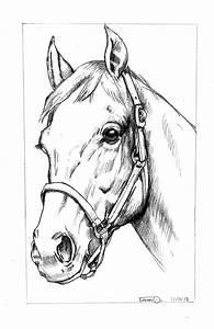 Head Horse Drawing At Getdrawings