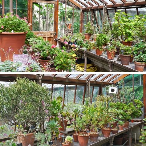 olive garden on wallisville chelsea physic garden cafe garden ftempo