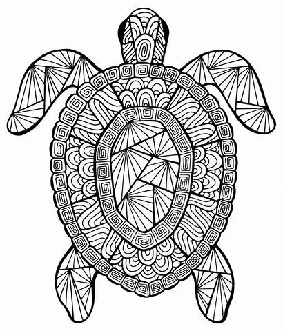 Turtle Animals Coloring Incredible Pages Adults Justcolor