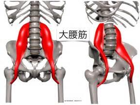 大腰筋 に対する画像結果
