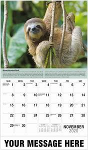 2020 Week Calendar International Wildlife Business Promo Calendar 2020