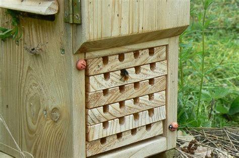 faune locale abeilles solitaires maison tude insectes maison pour coccinelle et chrysope