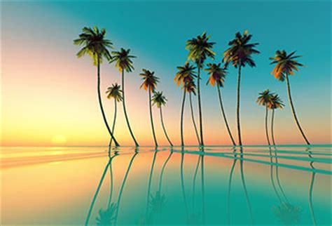 coconut palms wallpaper  bedroom wall decor