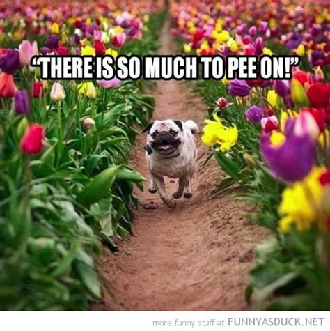 Flower Memes - dog loves flower what breed is it