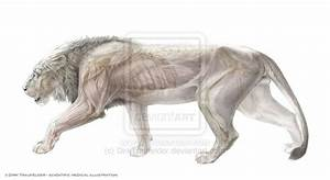 Lion Anatomy 1 By Dirktraufelder Deviantart Com On  Deviantart
