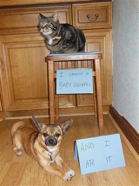 funny partners  crime animal edition  pics