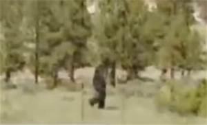 Bigfoot Evidence: Bigfoot Sightings of 2017 - February Edition