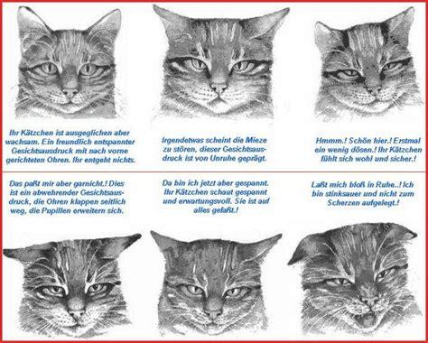 Die Sprache Der Katze